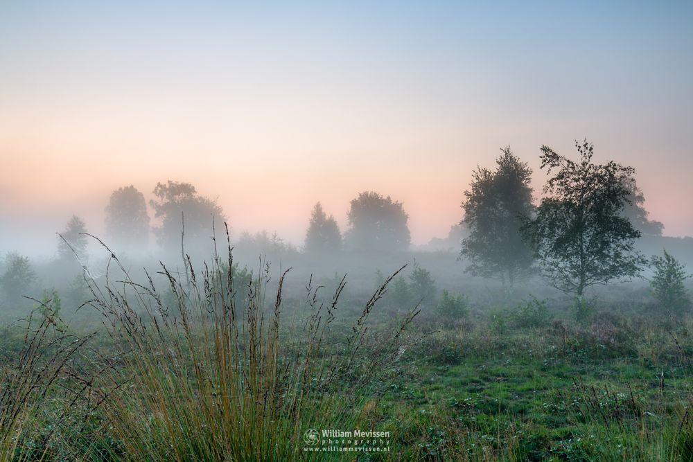 Photo in Nature #heathland #maasduinen #limburg #wellerlooi #bergen #nature #light #trees #fog #sunrise #mist #grasses #hamert #dehamert #heather