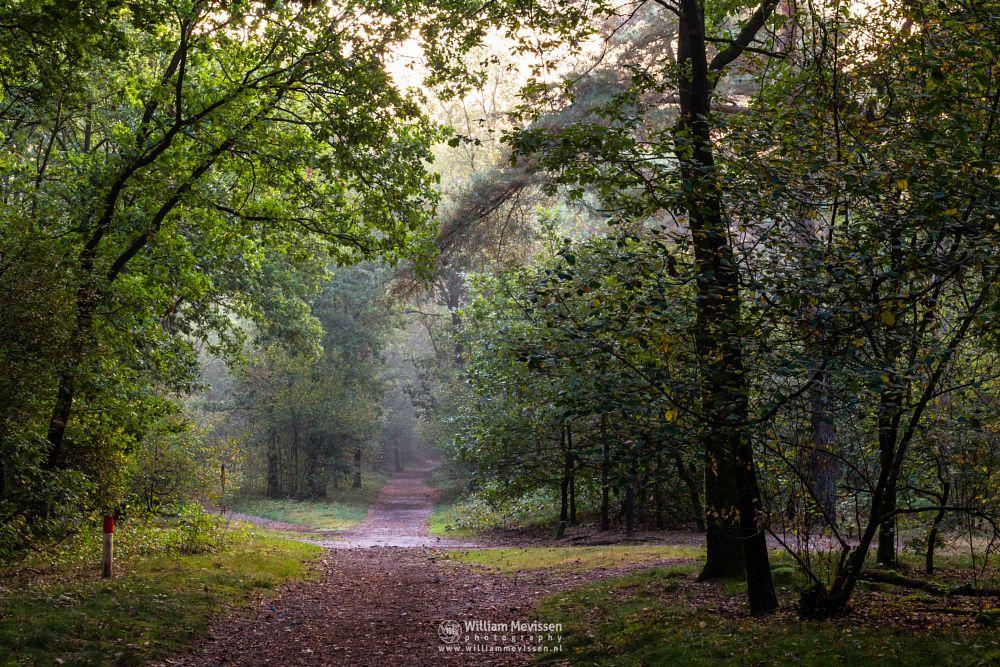 Photo in Nature #trees #pine #pine forest #forest #limburg #noord-limburg #venray #vlakwater #nature #green #city forest #light #mood #path #mist #autumn