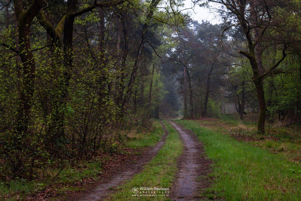 Photo in Nature #boshuizerbergen boschhuizerbe #boshuizerbergen #boschhuizerbergen #limburg #noord-limburg #venray #nature #forest #netherlands #rain #mist #trees #fresh #green