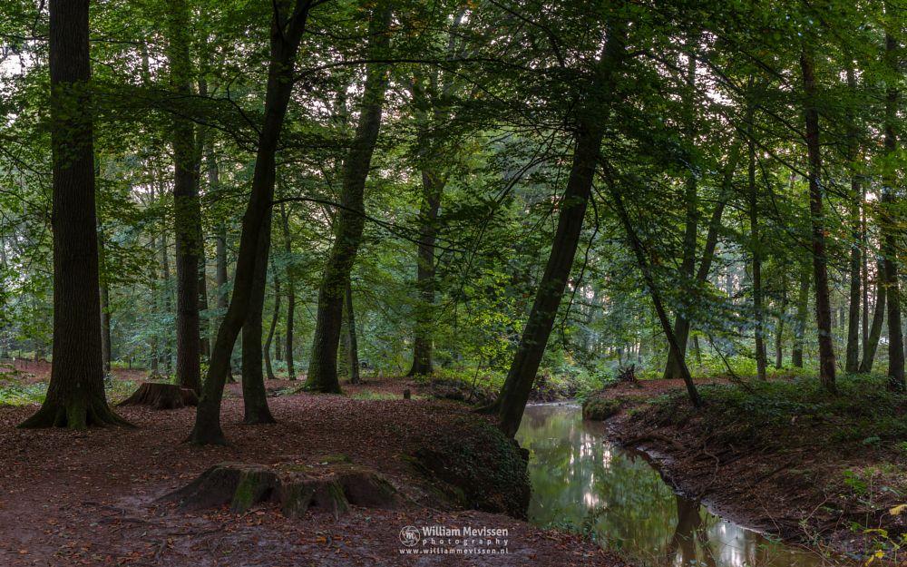 Photo in Nature #geijsteren #venray #oostrum #landgoed geijsteren #estate #landgoed #limburg #noord-limburg #nature #nature reserve #forest #woods #geysteren #path #autumn #brook #oostrumse beek #pano #panorama