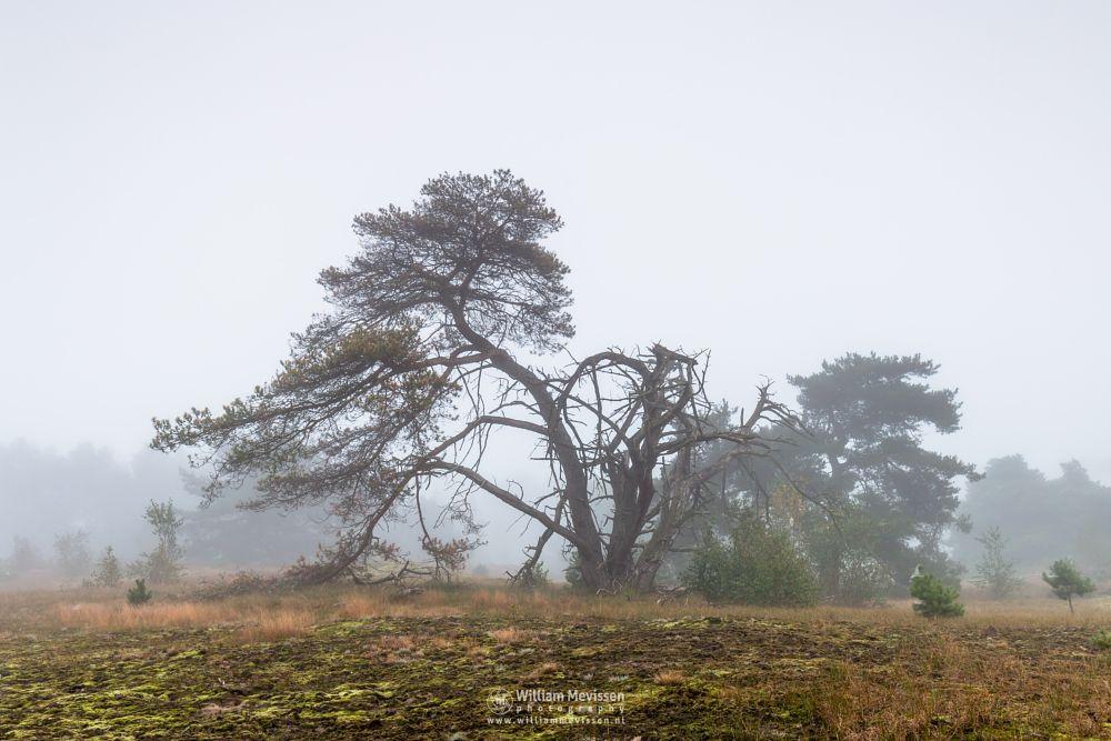 Photo in Landscape #mood #fog #dunes #tree #bergen #limburg #noord-limburg #nieuw-bergen #nature #light #mist #maasduinen #bergerheide #woods #forest