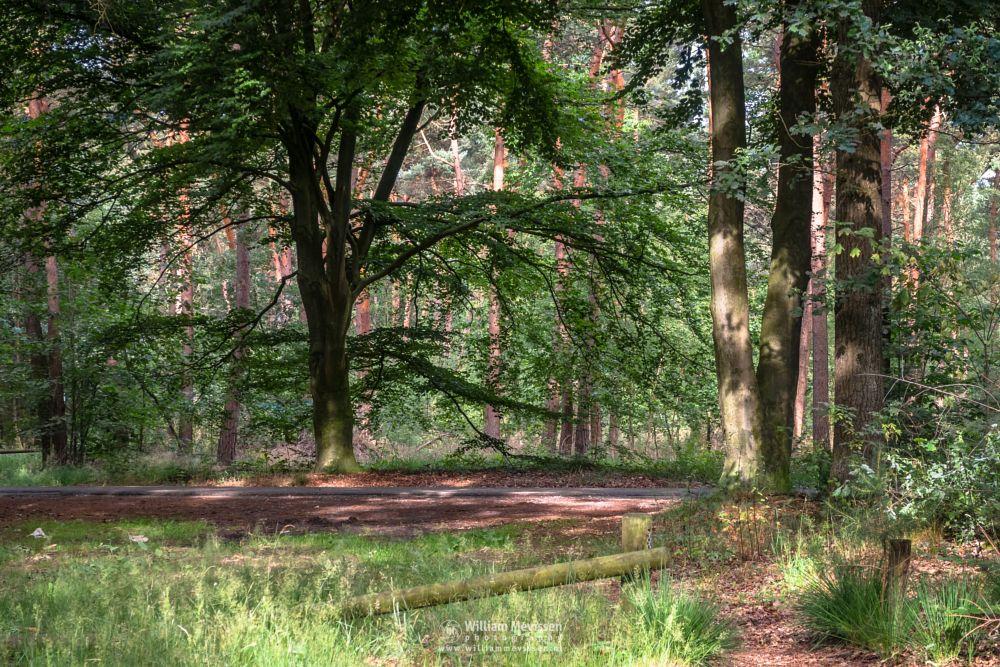 Photo in Nature #venray #limburg #noord-limburg #ballonzuilbossen #merselo #nature #trees #ballonzuil #netherlands #forest #summer #woods #silhouette #sunlight #tree