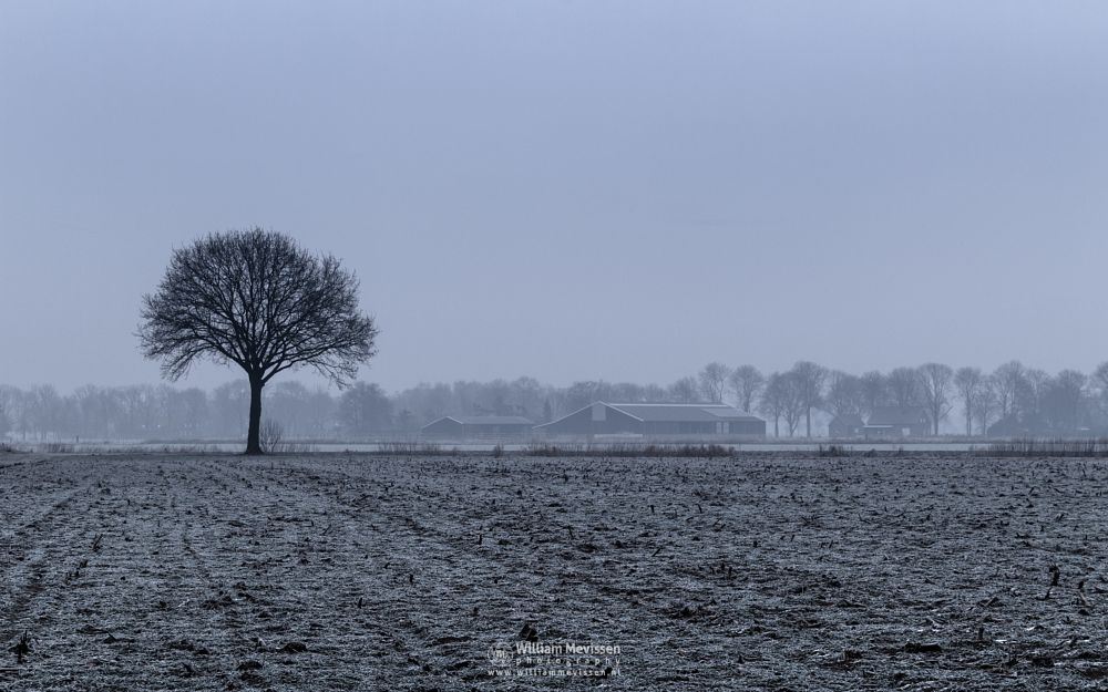 Photo in Nature #venray #merselo #brabander #limburg #noord-limburg #nature #frost #farmland #grasses #mist #winter #tree