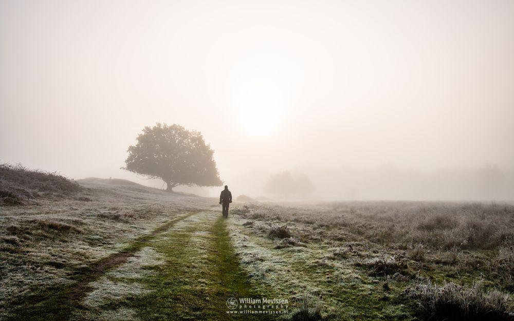 Photo in Landscape #bergerheide #forest #woods #maasduinen #limburg #noord-limburg #bergen #nieuw-bergen #mood #autumn #winter #frost #path #trees #person #walking #mysterious #nature #light #mist #sun