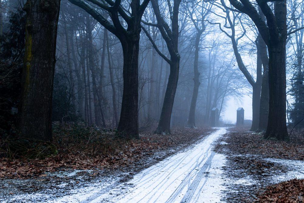 Photo in Nature #mist #limburg #noord-limburg #venray #annaterrein #annapark #nature #winter #forest #trees #path #snow