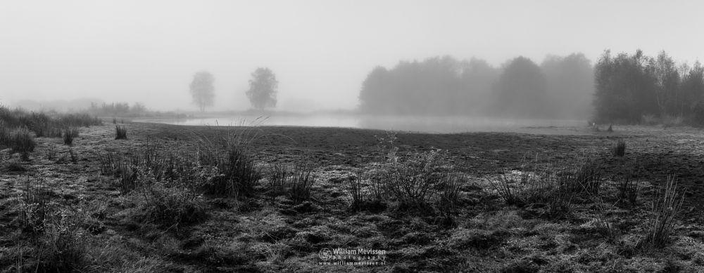 Photo in Black and White #bergerheide #forest #woods #heathland #maasduinen #limburg #nieuw-bergen #noord-limburg #bergen #nature #mist #fog #mood #fen #serene #blackandwhite #bw #bnw
