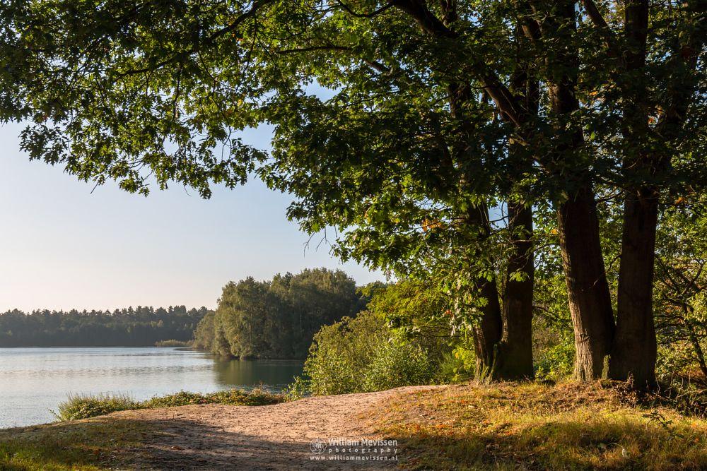 Photo in Nature #trees #lake #reindersmeer #maasduinen #limburg #noord-limburg #nature #colors #sunrise #view #mood #forest