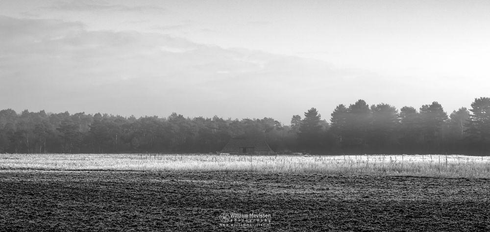 Photo in Black and White #bergerheide #forest #woods #maasduinen #limburg #noord-limburg #nieuw-bergen #bergen #nature #light #mist #mood #frost #surise #winter #fog