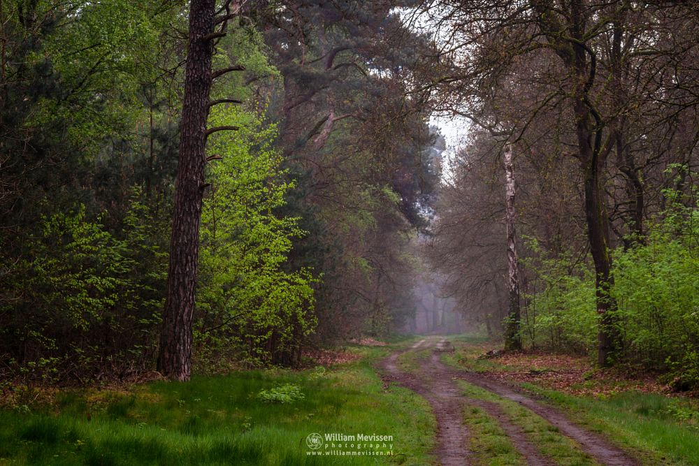 Photo in Nature #geijsteren #venray #oostrum #landgoed geijsteren #noord-limburg #limburg #nature #forest #woods #geysteren #mist #spring #green #chapel #willibrorduskapel #path