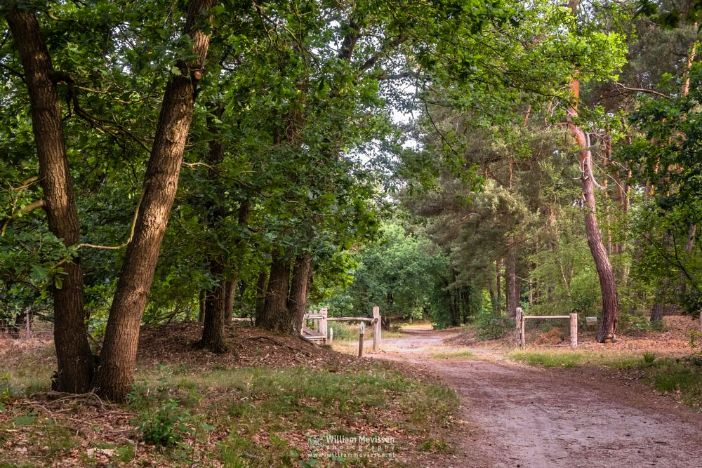 Photo in Nature #boshuizerbergen #boschhuizerbergen #limburg #venray #nature #noord-limburg #shiftingsand #summer #green #forest #woods