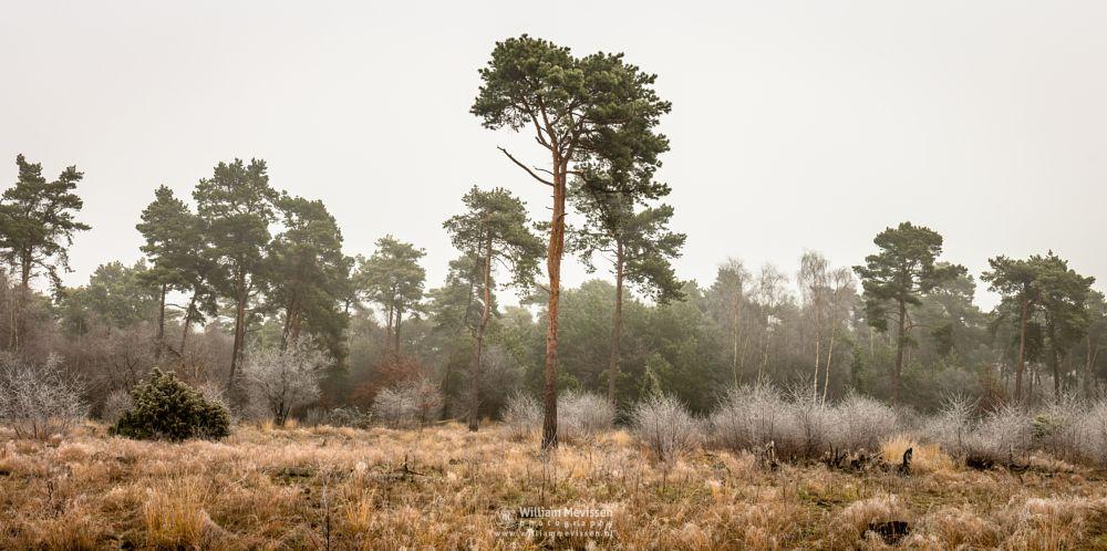 Photo in Landscape #winterscape #winter #frosty #trees #forest #venray #boshuizerbergen #boschhuizerbergen #limburg #noord-limburg #netherlands