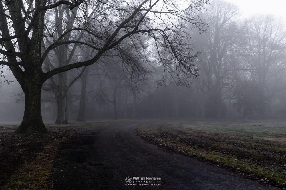 Photo in Landscape #mist #limburg #noord-limburg #venray #annaterrein #annapark #nature #heritage #autumn #silhouettes #forest #trees #path