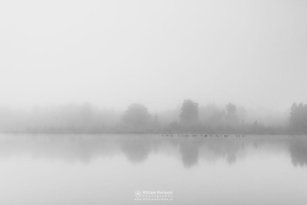 Photo in Black and White #bergerheide #maasduinen #limburg #noord-limburg #bergen #nieuw-bergen #nature #mist #fog #mood #water #driessenven #licht #ducks #serene #fen