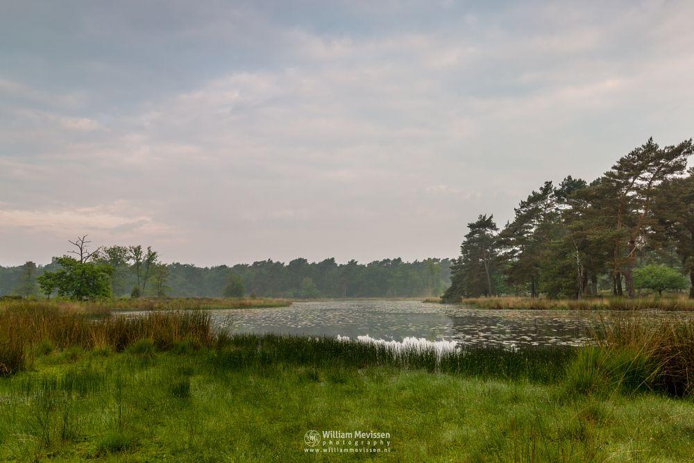 Photo in Landscape #ravenvennen #lomm #limburg #noord-limburg #arcen #nature #forest #velden #netherlands #venlo #fen #swamp #mood #trees #sunrise