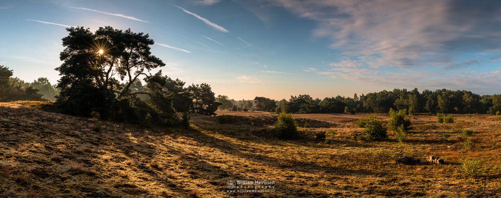 Photo in Landscape #bergerheide #forest #woods #heathland #maasduinen #limburg #noord-limburg #nieuw-bergen #bergen #national park #nature #sand #dunes #sanddunes #light #land #trees #clouds #sky #cloudy #sun #foliage #moss #sunrise