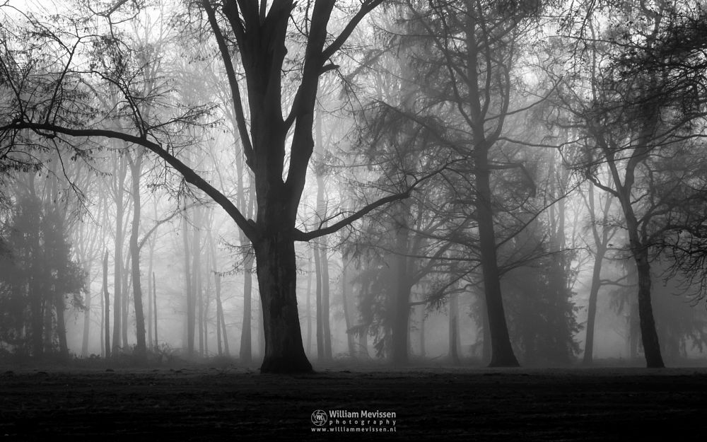 Photo in Black and White #mist #limburg #noord-limburg #venray #annaterrein #annapark #nature #hospital #heritage #autumn #silhouettes #forest #trees #path #blackandwhite