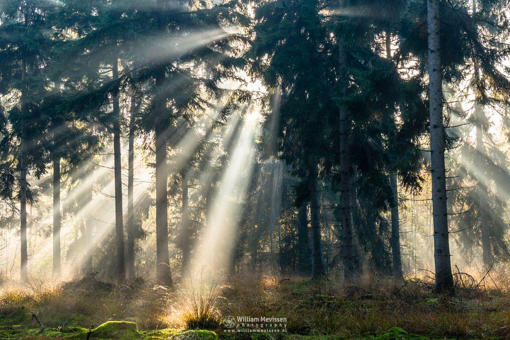 Photo in Nature #venray #limburg #noord-limburg #merselo #nature #trees #ballonzuilbossen #forest #autumn #woods #rays #mood #mist #fog #sun #sunrays
