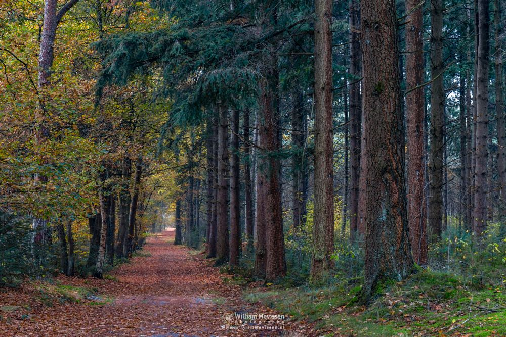 Photo in Nature #geijsteren #venray #oostrum #landgoed geijsteren #landgoed #limburg #noord-limburg #nature #forest #woods #autumn #trees #path #fall