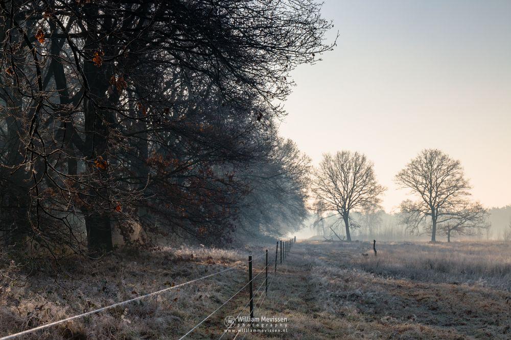 Photo in Landscape #bergerheide #bergen #nieuw-bergen #limburg #maasduinen #noord-limburg #mist #mood #frost #surise #fence #winter #fog