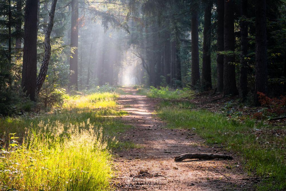 Photo in Nature #venray limburg noord-limburg