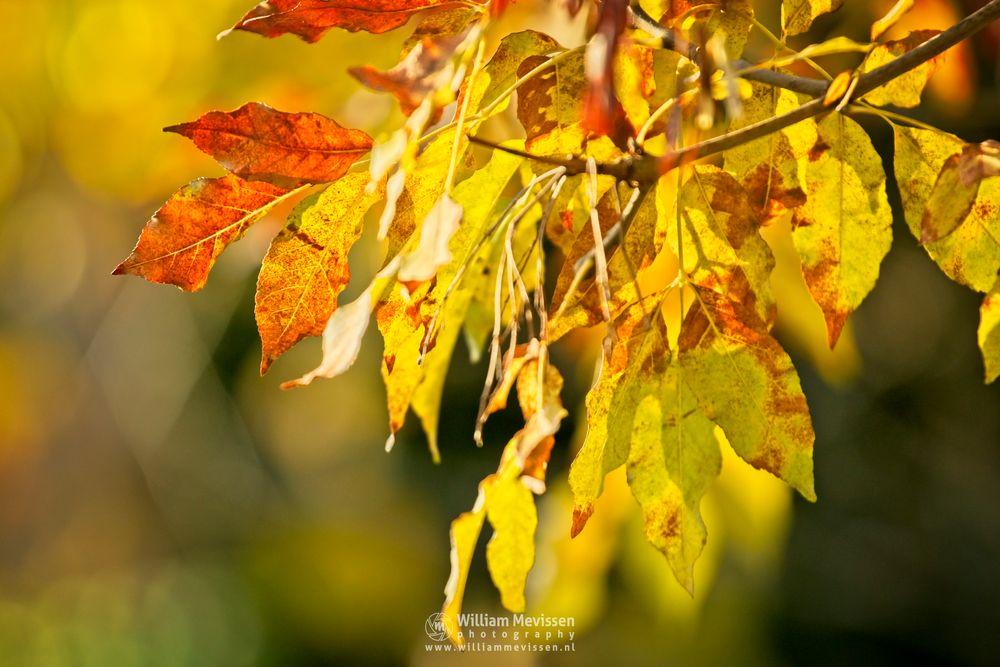 Photo in Nature #autumn #mood #tones #colors #foliage #leaves #bokeh
