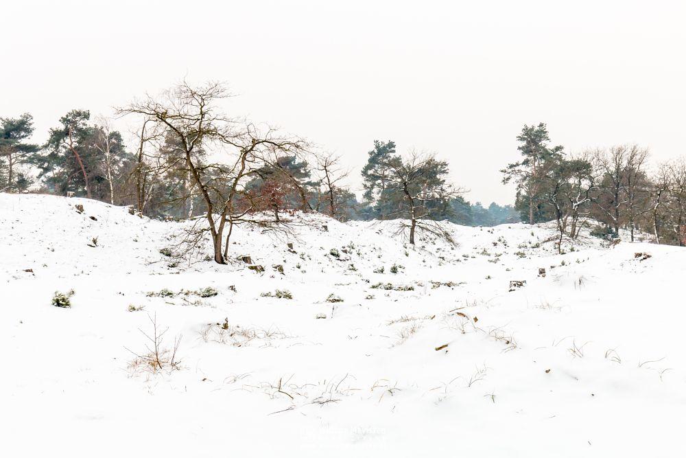 Photo in Landscape #boshuizerbergen #boschhuizerbergen #limburg #venray #nature #woods #forest #netherlands #winter #snow #winterscape #trees #winterlandscape