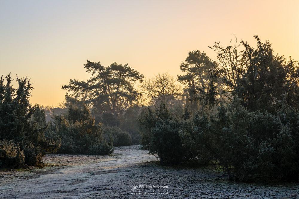 Photo in Landscape #boshuizerbergen boschhuizerbe #boshuizerbergen #boschhuizerbergen #limburg #forest #venray #noord-limburg #netherlands #path #pine #winter #juniper