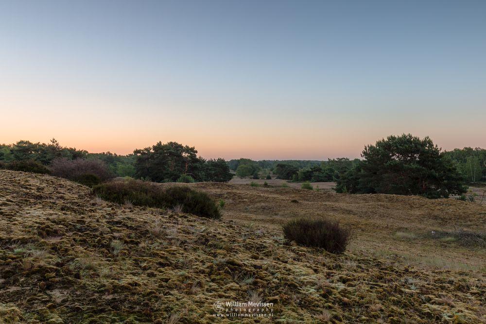 Photo in Landscape #bergerheide #forest #woods #maasduinen #limburg #noord-limburg #nieuw-bergen #bergen #nature #tree #view #twilight