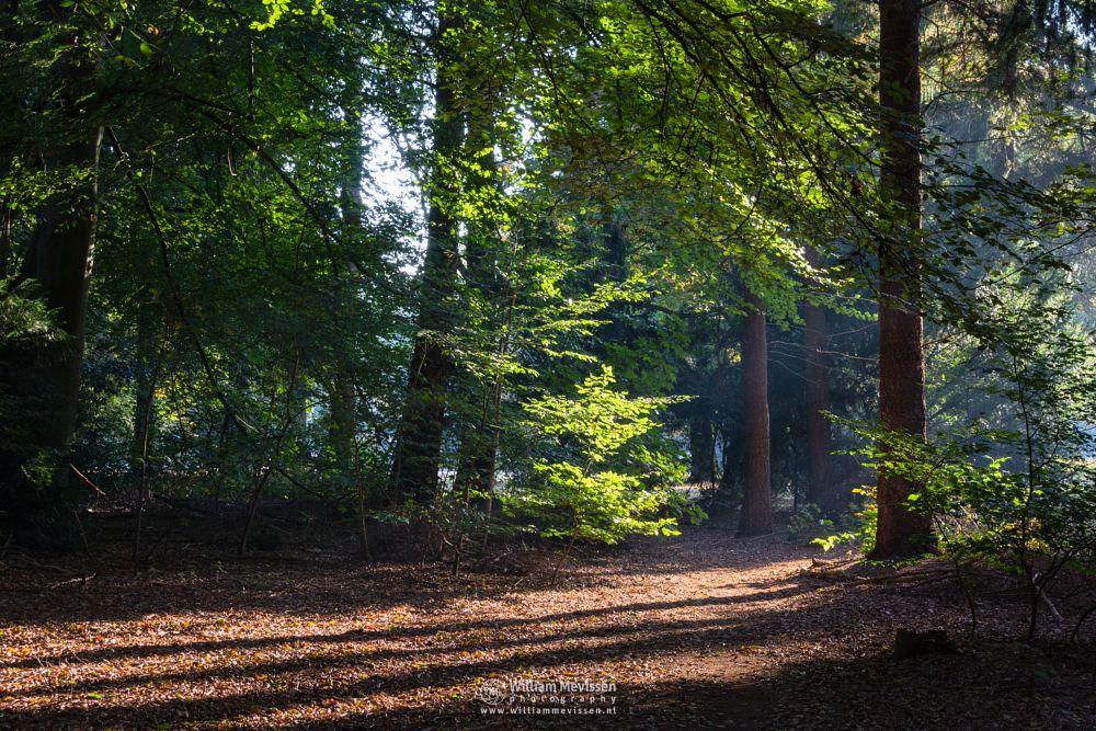 Photo in Nature #trees #sint #limburg #noord-limburg #venray #st. annaterrein #sint annaterrein #nature #green #sunrise #historical #psychiatric #hospital #heritage #decay #light #mood #path