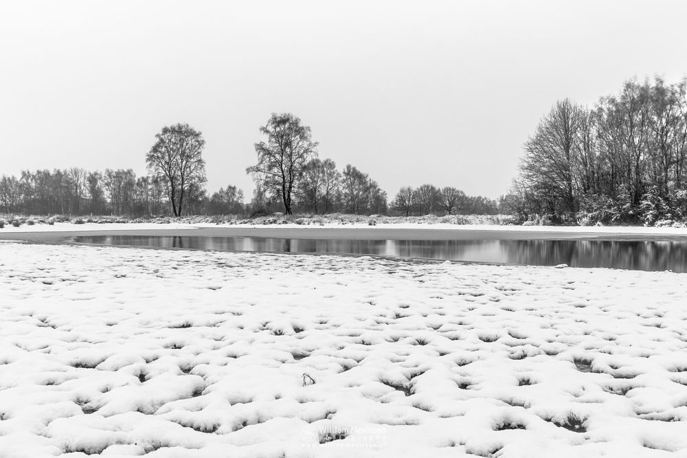 Photo in Black and White #bergerheide #maasduinen #limburg #noord-limburg #bergen #nieuw-bergen #nature #winter #snow #tree #trees