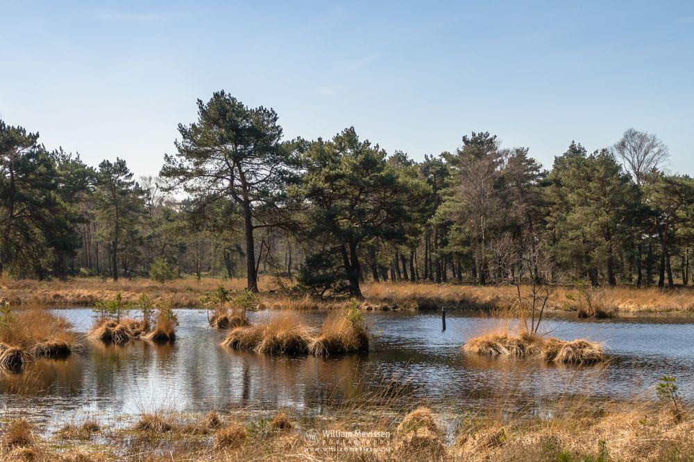 Photo in Landscape #ravenvennen #lomm #limburg #velden #venlo #netherlands #nature #trees #swamp #spring #golden #grass #reflections #serenity #serene #grasses #noord-limburg