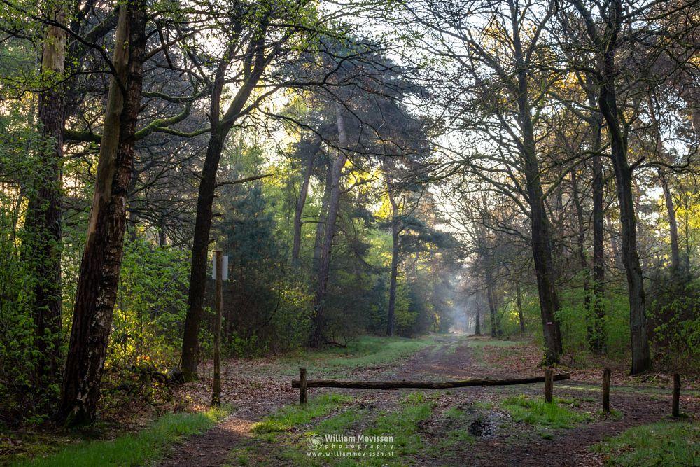 Photo in Random #geijsteren #venray #oostrum #landgoed geijsteren #noord-limburg #limburg #forest #spring #chapel #willibrorduskapel #boshuizerbergen #path #rays