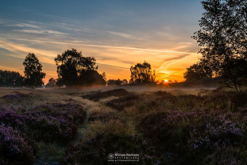 Photo in Nature #forest #woods #heathland #maasduinen #limburg #noord-limburg #nieuw-bergen #bergen #national park #nature #light #land #trees #ceresweg #eckeltsebergen #heather #sunrise #blooming heather #path #grasses #hdr