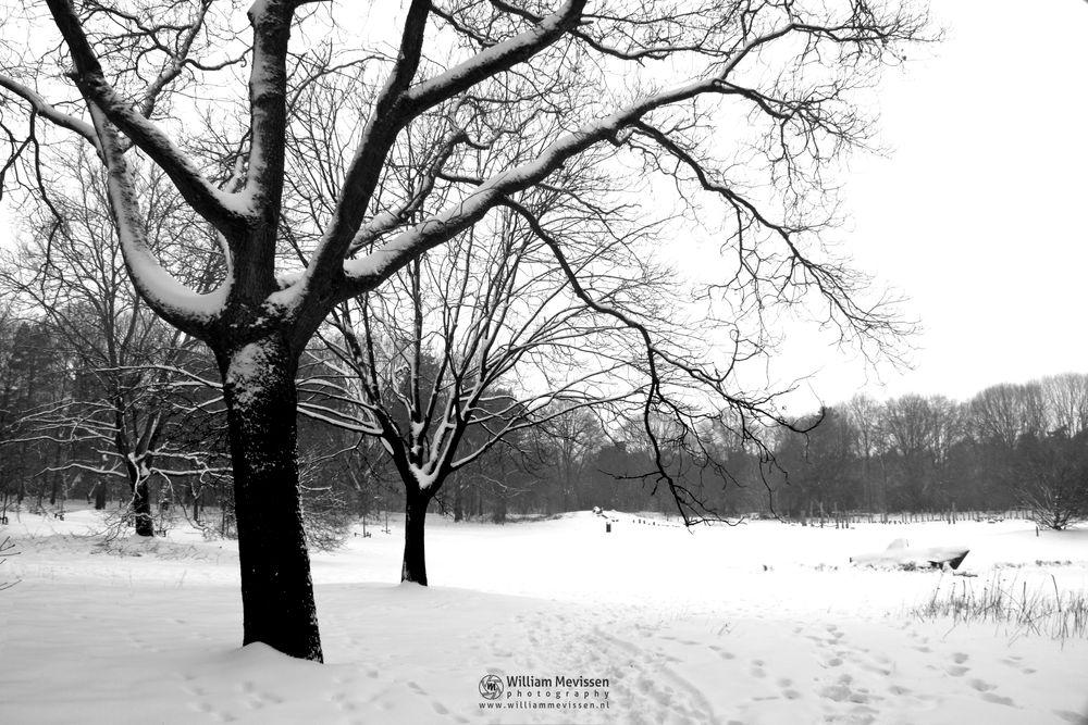 Photo in Black and White #vlakwater #snow #submarine #u-boot #blackandwhite #venray #noord-limburg #netherlands #trees #black and white #limburg