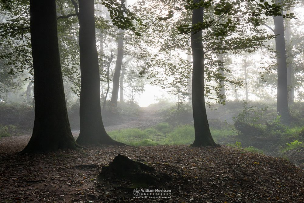 Photo in Nature #geijsteren #venray #oostrum #landgoed geijsteren #estate #landgoed #limburg #noord-limburg #nature #nature reserve #forest #woods #geysteren #light #tree #trees #path #mist #misty #fog #foggy