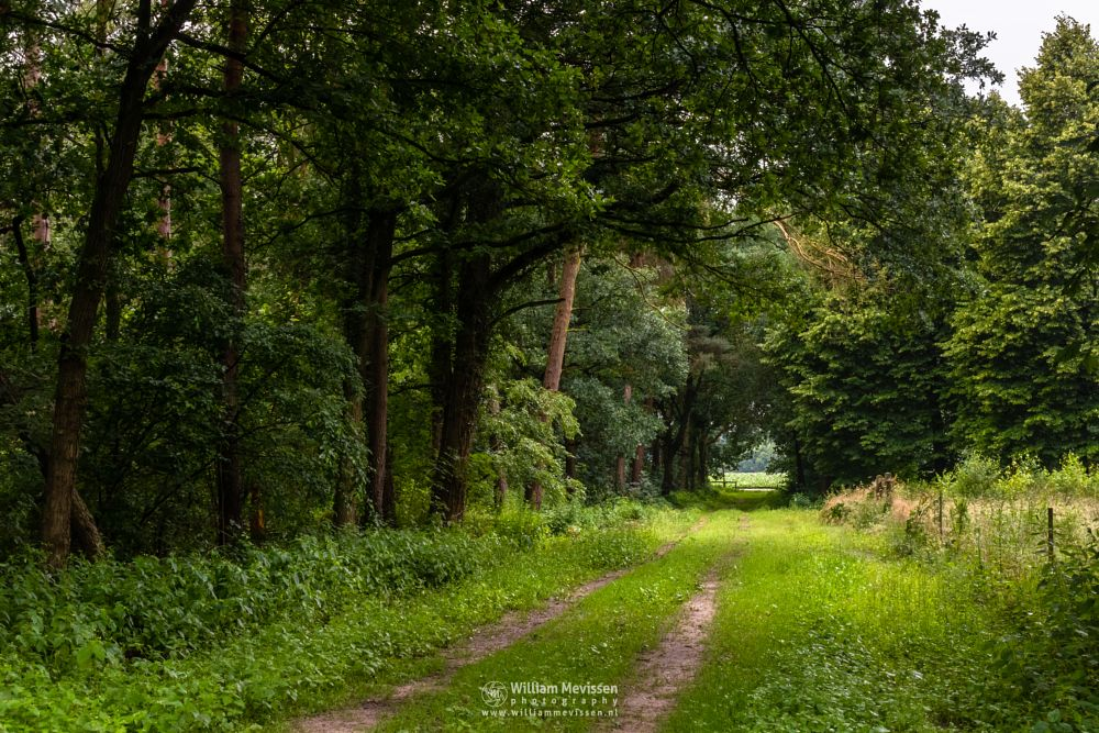 Photo in Nature #boshuizerbergen #boschhuizerbergen #limburg #noord-limburg #venray #nature #nature reserve #forest #woods #limburgs landschap #netherlands #pine #tunnel #path #oostrum