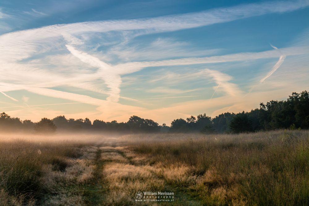 Photo in Nature #forest #woods #heathland #maasduinen #limburg #noord-limburg #nieuw-bergen #bergen #national park #nature #light #land #trees #ceresweg #eckeltsebergen #eckeltse bergen #sunrise #path #grasses #gras