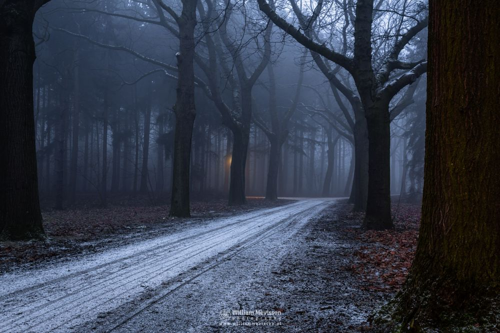 Photo in Landscape #mist limburg noord-limburg  #mist #limburg #venray #noord-limburg #annaterrein #annapark #nature #historical #psychiatric #hospital #heritage #winter #frost #forest #trees #path #snow #fading