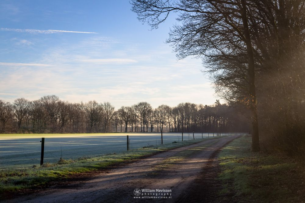 Photo in Landscape #venray #limburg #noord-limburg #ballonzuilbossen #merselo #nature #trees #netherlands #ballonzuil #spring #cold #sunrise #rural #path