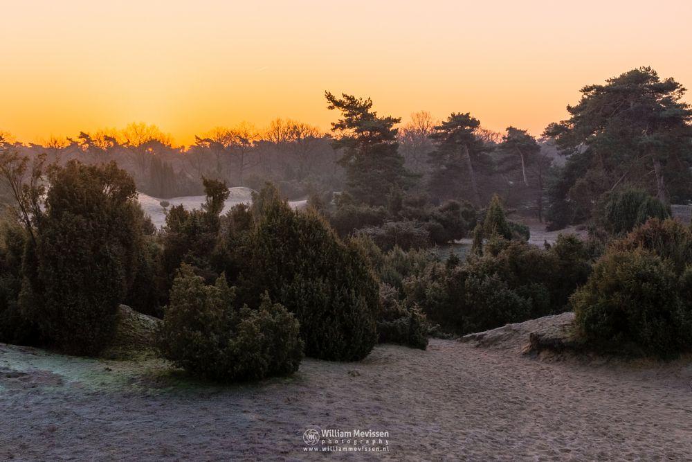 Photo in Landscape #boshuizerbergen #boschhuizerbergen #limburg #noord-limburg #venray #forest #woods #netherlands #pine #grasses #winter #sand #dunes #juniper