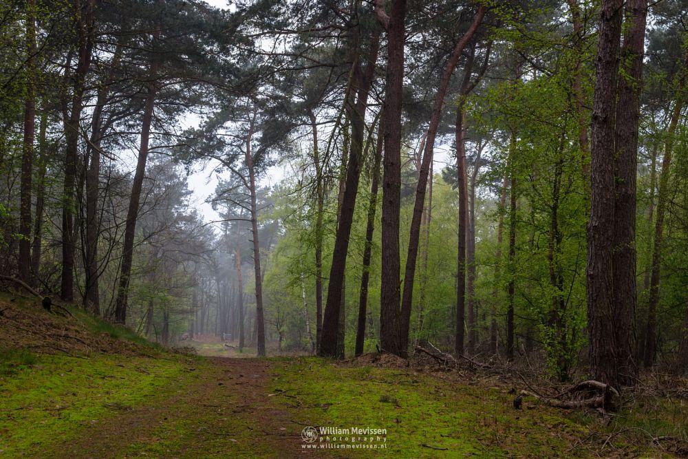 Photo in Nature #boshuizerbergen #boschhuizerbergen #limburg #noord-limburg #venray #nature #landschap #forest #woods #netherlands #mist #trees #fresh #green