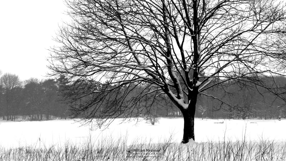 Photo in Black and White #snow #winter #tree #no people #black and white #venray #vlakwater #netherlands #silhouette