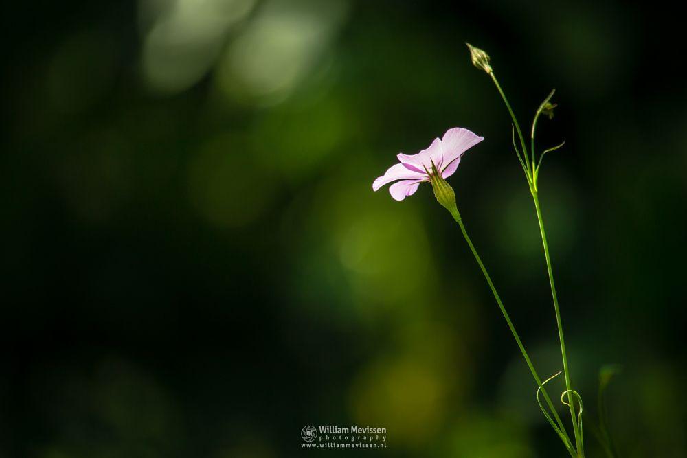 Photo in Macro #flower #flowers #bokeh #macro #colors #colorful #spring #summer #blooming #sunlight #light #flowering