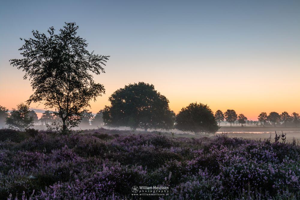 Photo in Landscape #blooming #eckeltsebergen #eckeltse #heather #maasduinen #limburg #noord-limburg #nieuw-bergen #bergen #trees #dunes #sunrise #mood #fog #mist