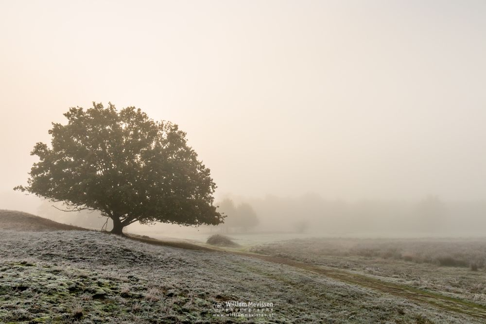 Photo in Landscape #bergerheide #maasduinen #limburg #bergen #noord-limburg #nieuw-bergen #light #autumn #warm #sunny #tree