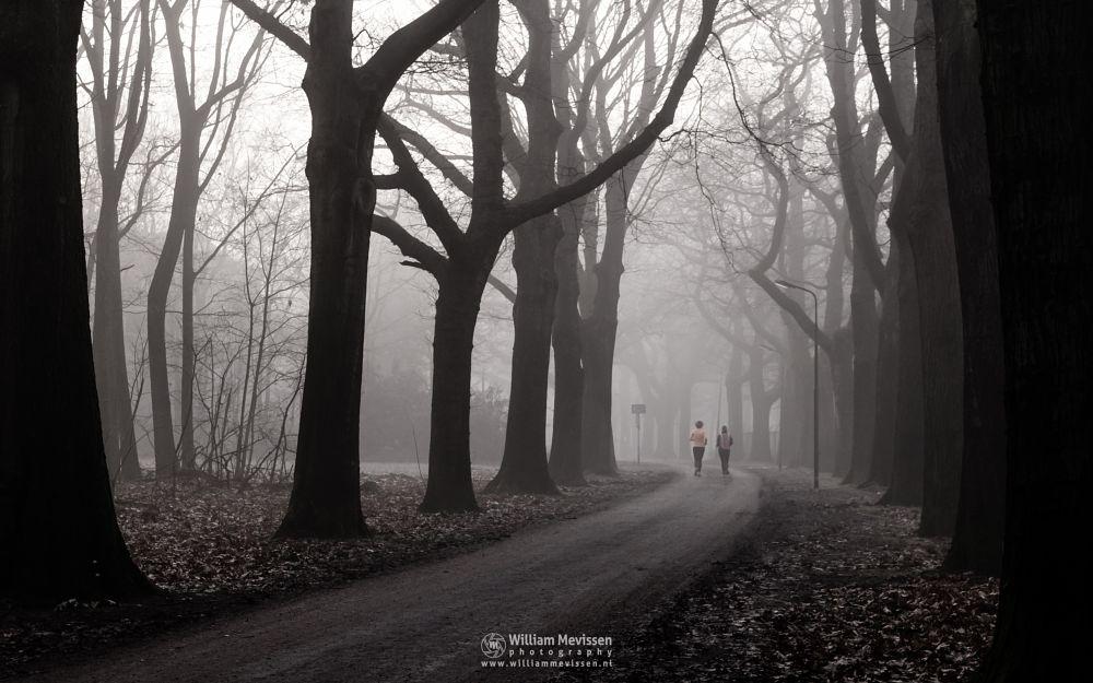 Photo in Nature #mist #limburg #noord-limburg #venray #annaterrein #annapark #nature #historical #psychiatric #hospital #heritage #muted #jogging