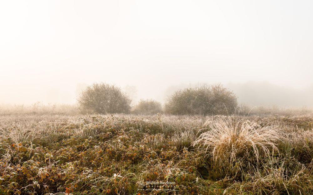 Photo in Nature #bergerheide #woods #maasduinen #forest #limburg #bergen #nature #light #mist #mood #autumn #winter #frost #grasses #nieuw-bergen #noord-limburg