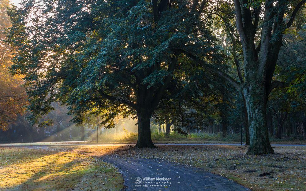Photo in Nature #trees #pine #forest #limburg #noord-limburg #venray #sint annaterrein #annaterrein #nature #hospital #psychiatric #autumn #light #mood #path