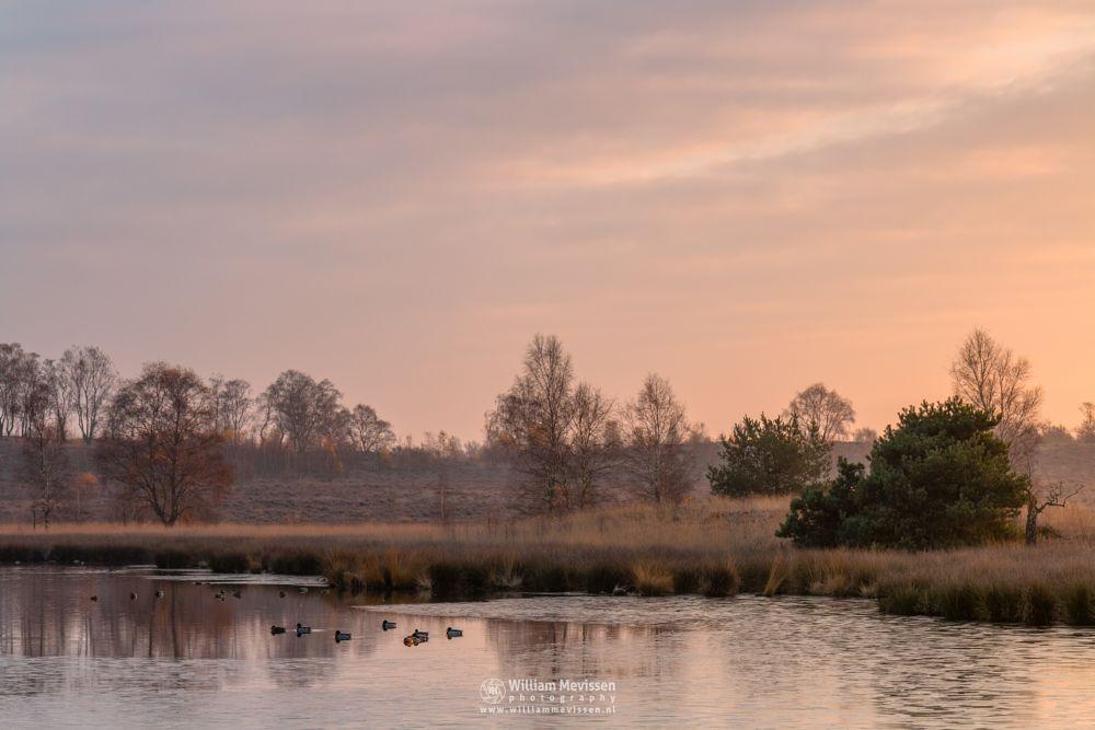 Photo in Landscape #heathland #maasduinen #limburg #noord-limburg #wellerlooi #bergen #nature #light #pikmeeuwenwater #sunrise #hamert #dehamert #fen
