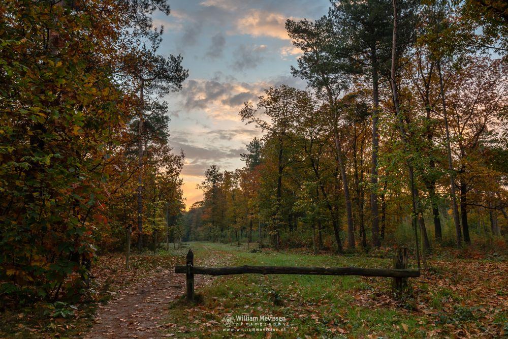 Photo in Nature #geijsteren #venray #oostrum #limburg #willibrorduskapel #mood #sunrise #path #trees #chapel #geysteren #forest #autumn #noord-limburg #nature #landgoed geijsteren